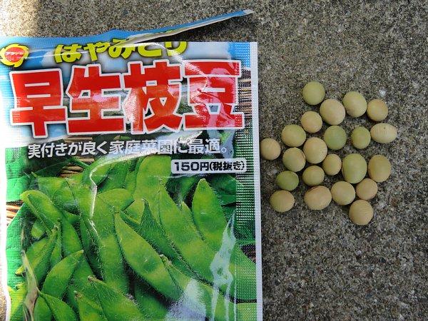 2017年5月22日 枝豆の種を蒔きました !_b0341140_20451631.jpg