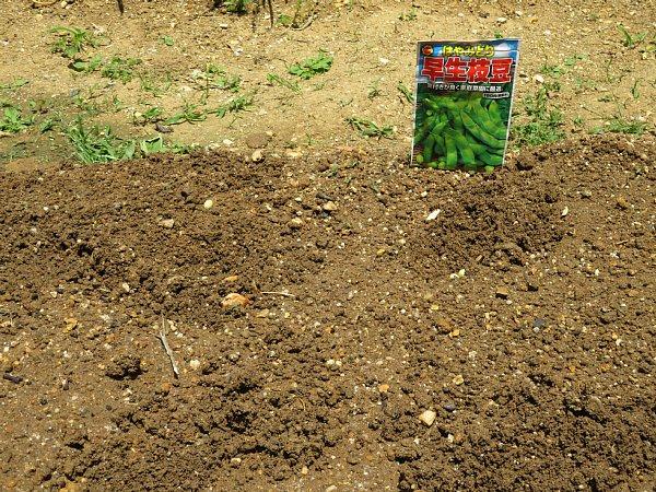 2017年5月22日 枝豆の種を蒔きました !_b0341140_20462317.jpg