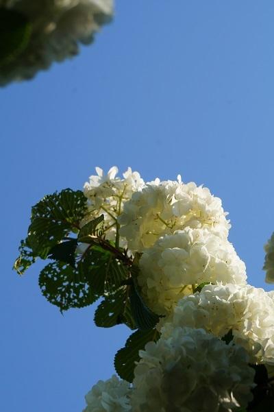 ガーデンマルシェ、一日目終了♪_e0254750_21214802.jpg