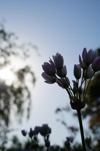 ガーデンマルシェ、一日目終了♪_e0254750_21260708.jpg