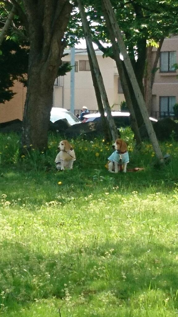 木陰で、ご主人様を待つ二匹の犬_b0106766_13593594.jpg