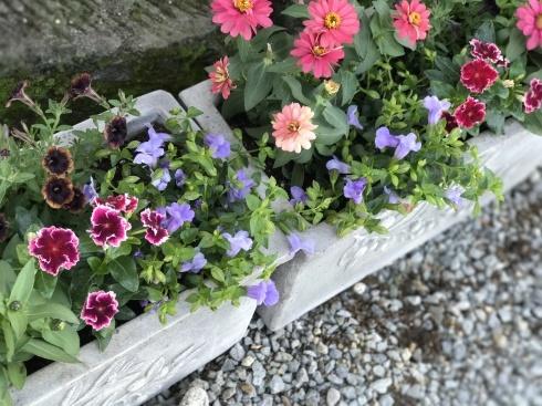 母の日が終わったら、あちこちの花壇や鉢の植え替え・・・_b0137969_18345078.jpg