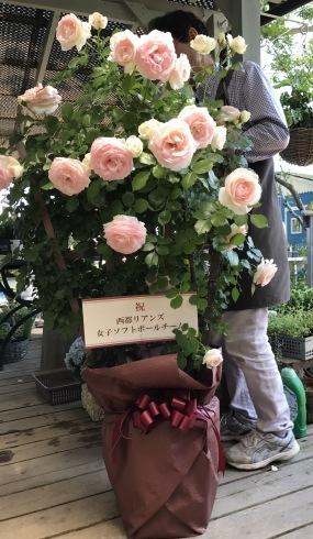 母の日が終わったら、あちこちの花壇や鉢の植え替え・・・_b0137969_18351188.jpg