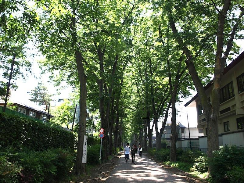 Tokyo Travel Guide Kichijoji Sightseeing 100 -003 Zelkova Tree-Lined Street  Seikei University_e0122680_16060277.jpg