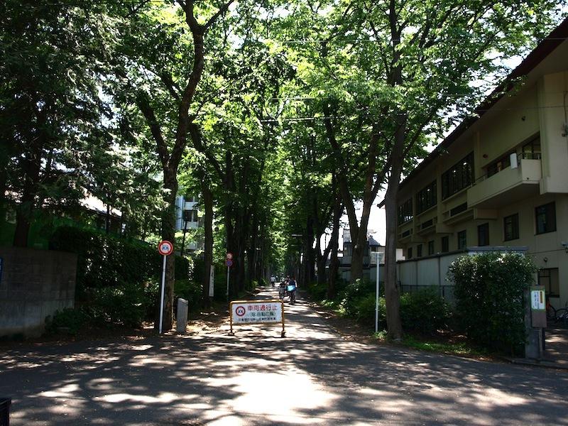 Tokyo Travel Guide Kichijoji Sightseeing 100 -003 Zelkova Tree-Lined Street  Seikei University_e0122680_16065168.jpg