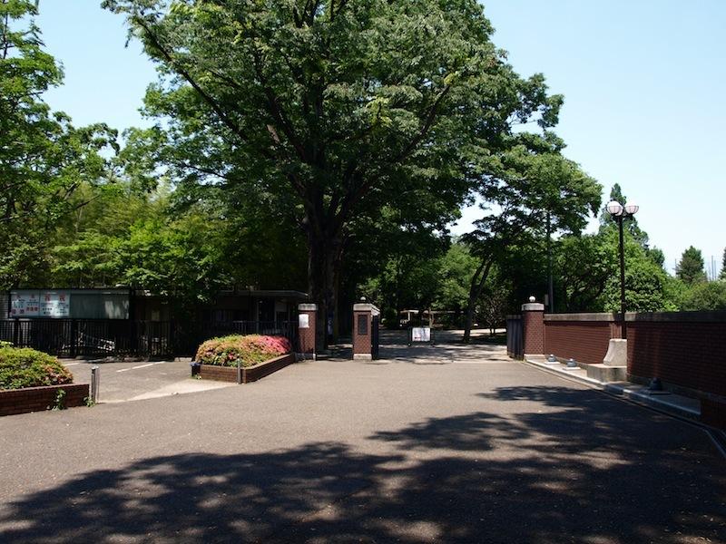 Tokyo Travel Guide Kichijoji Sightseeing 100 -003 Zelkova Tree-Lined Street  Seikei University_e0122680_16071310.jpg