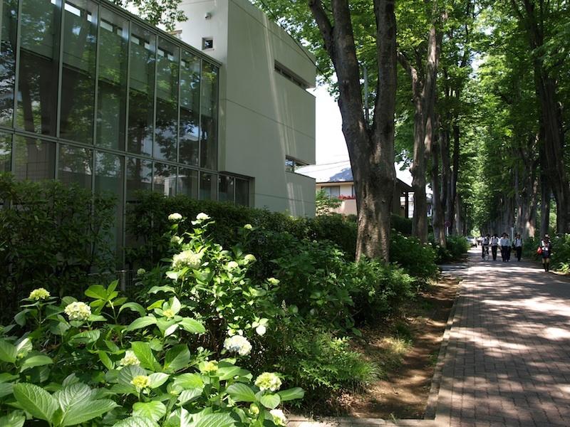 Tokyo Travel Guide Kichijoji Sightseeing 100 -003 Zelkova Tree-Lined Street  Seikei University_e0122680_16082648.jpg