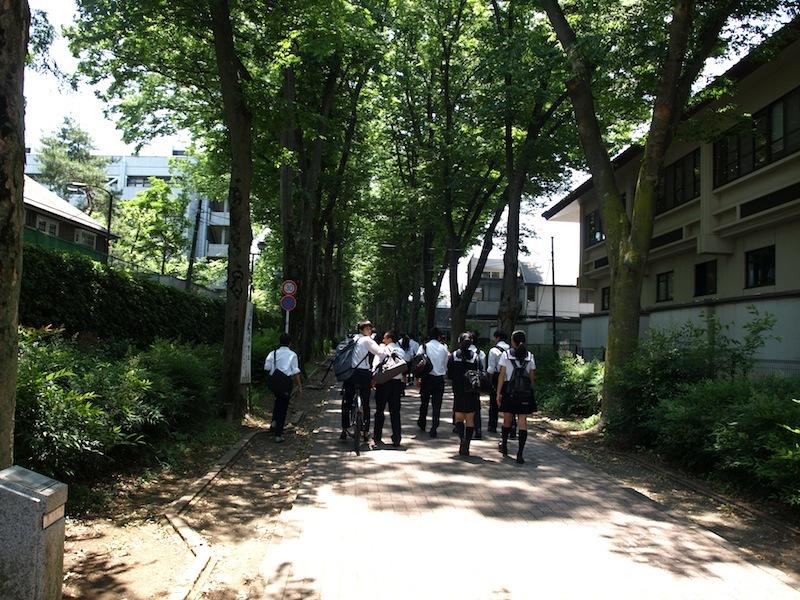 Tokyo Travel Guide Kichijoji Sightseeing 100 -003 Zelkova Tree-Lined Street  Seikei University_e0122680_16100685.jpg