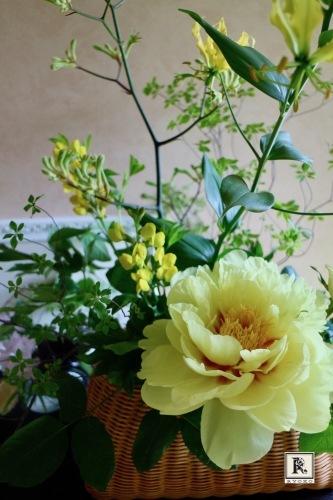 5月らしい色合いの枝ものと今回は様々な「黄色」をいけました。_c0128489_22470348.jpg