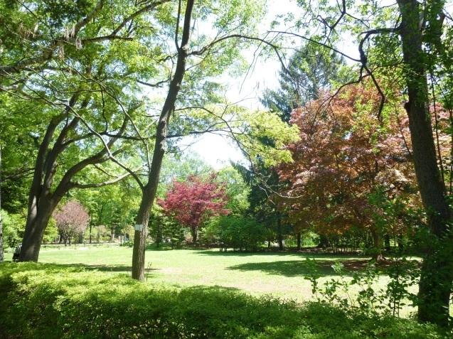 豊平公園_b0198109_17083599.jpg