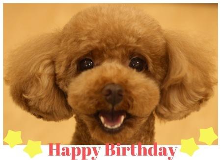 Happy Birthday ♡ ティアラちゃん_d0060413_11385278.jpeg