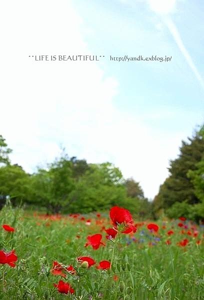新緑の季節_d0083623_0114159.jpg