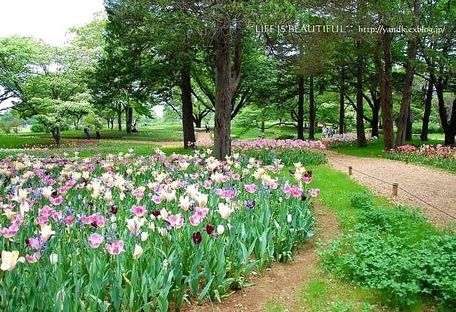 新緑の季節_d0083623_015133.jpg