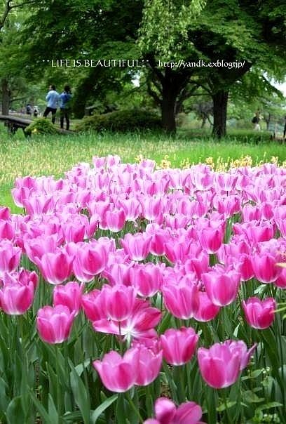 新緑の季節_d0083623_0172491.jpg