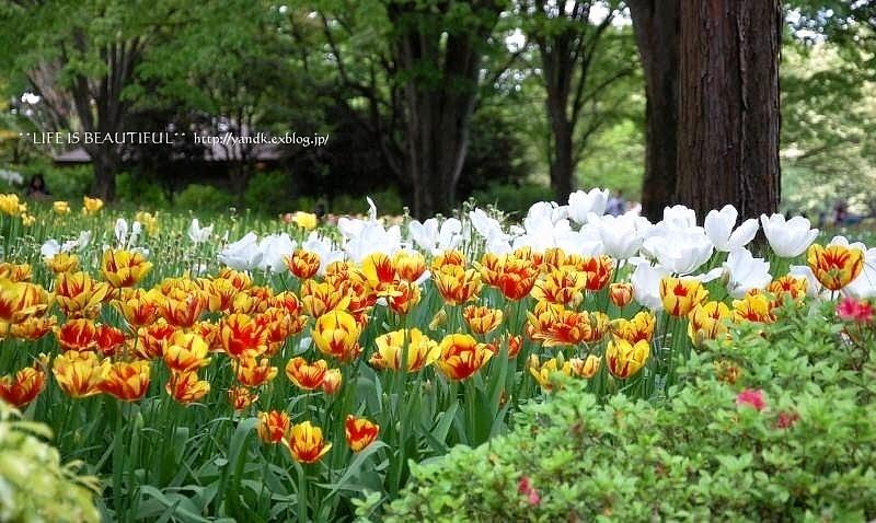 新緑の季節_d0083623_0175359.jpg