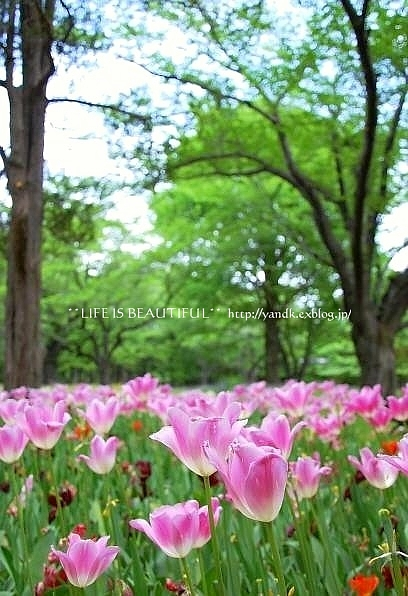 新緑の季節_d0083623_0182366.jpg