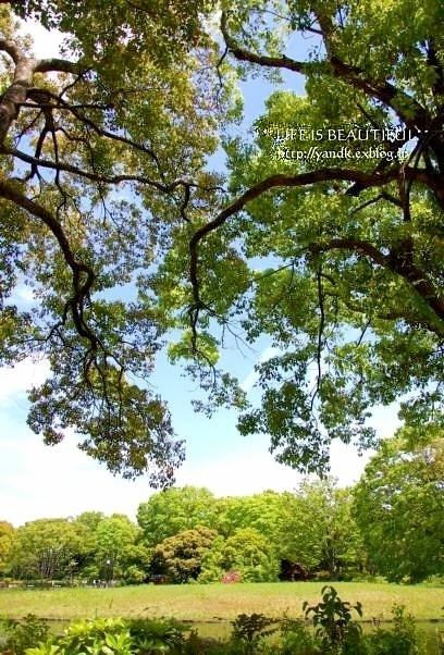 新緑の季節_d0083623_02252100.jpg
