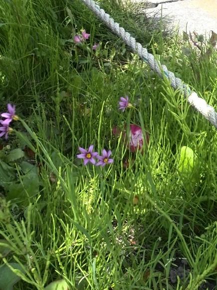 植物の生命力って、スゴイ!_f0340942_20431279.jpg