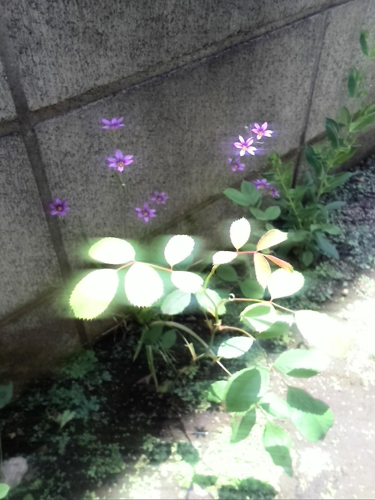 植物の生命力って、スゴイ!_f0340942_20522517.jpg
