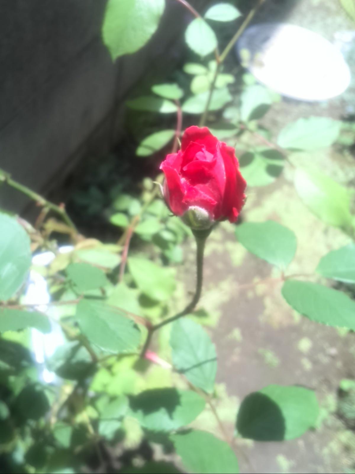 植物の生命力って、スゴイ!_f0340942_21181014.jpg