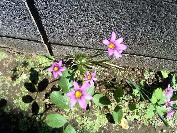 植物の生命力って、スゴイ!_f0340942_21450163.jpg
