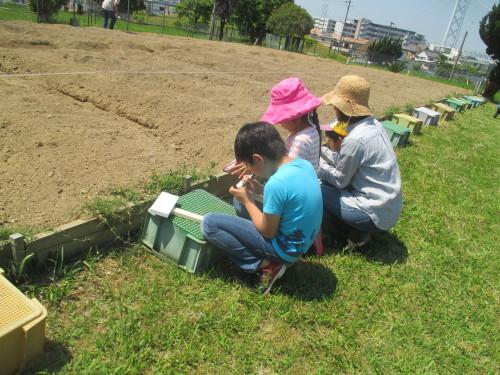 五色塚おやこ楽農くらぶ 29年度開校です!!_f0079749_06223211.jpg
