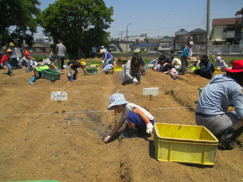 五色塚おやこ楽農くらぶ 29年度開校です!!_f0079749_06365939.jpg