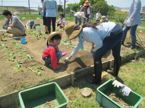 五色塚おやこ楽農くらぶ 29年度開校です!!_f0079749_06505108.jpg