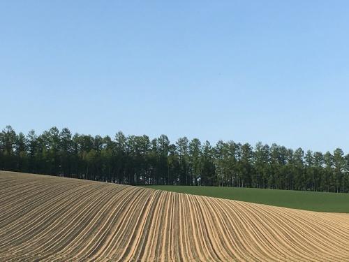 緑モリモリの丘と道端の樹木_e0326953_22263521.jpg