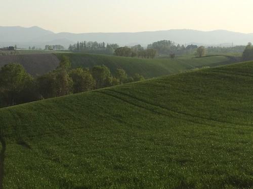 緑モリモリの丘と道端の樹木_e0326953_22264894.jpg