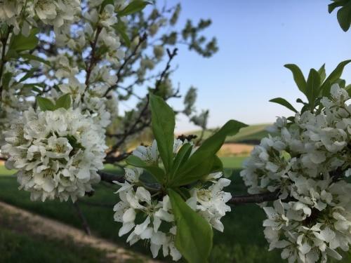 緑モリモリの丘と道端の樹木_e0326953_22274189.jpg