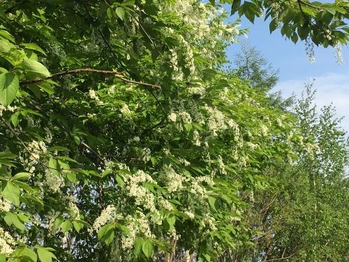 緑モリモリの丘と道端の樹木_e0326953_22281111.jpg
