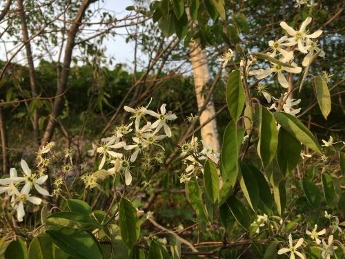 緑モリモリの丘と道端の樹木_e0326953_22290926.jpg