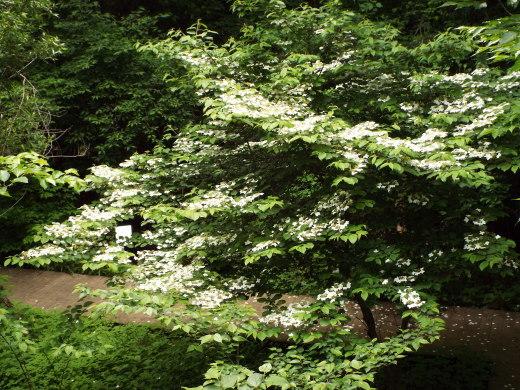 5月18日長池公園見て歩き。_e0145782_05092762.jpg