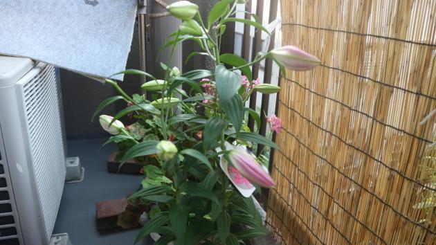 咲きましたよ!_f0280186_19015160.jpg