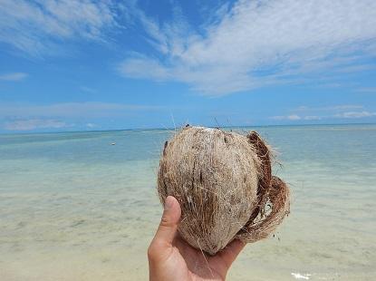 流れよる椰子の実ひとつ_e0077899_8165461.jpg