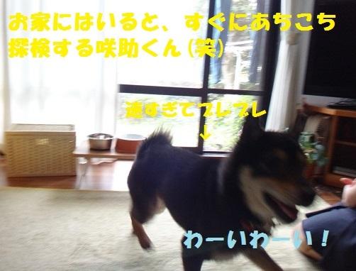 f0121712_16133920.jpg