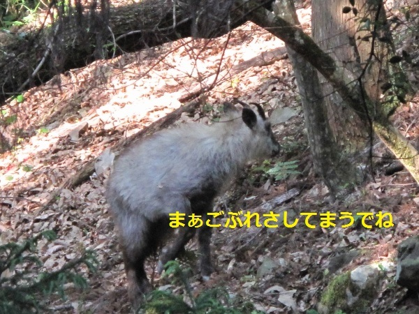 f0143123_21175360.jpg