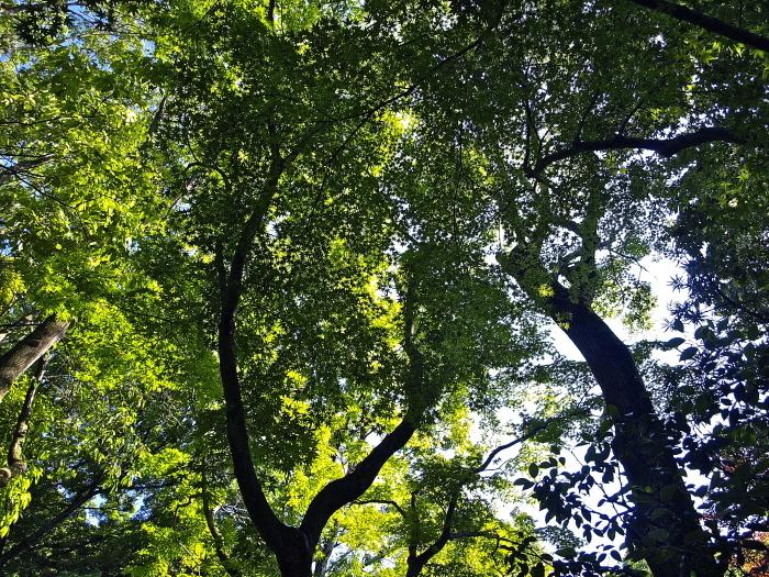 新緑の庭_f0315034_12055028.jpg