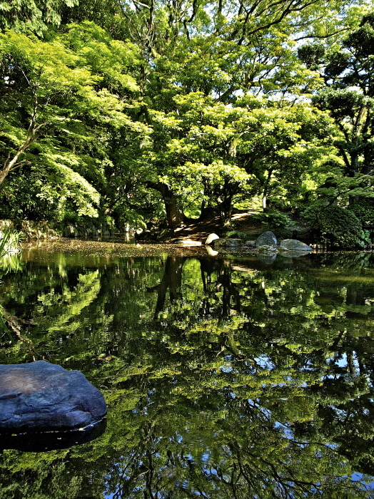 新緑の庭_f0315034_12215817.jpg