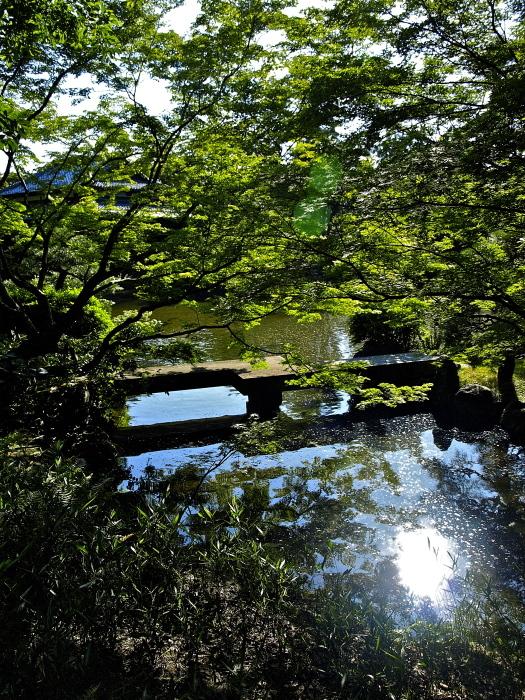 新緑の庭_f0315034_12221022.jpg