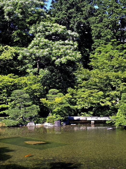 新緑の庭_f0315034_12353707.jpg