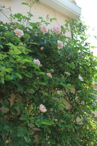 5月の庭_e0086738_13493006.jpg