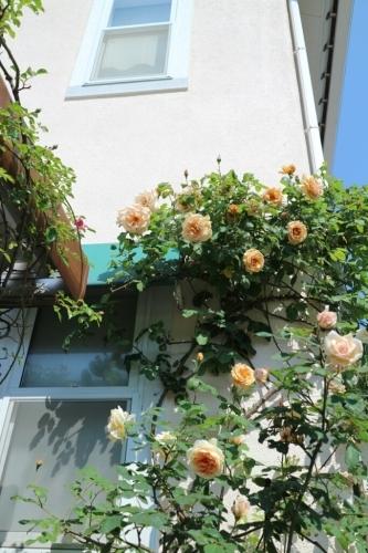 5月の庭_e0086738_13493249.jpg