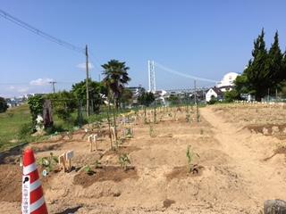 いろんな夏野菜が植わっていました_f0079749_1729732.jpg