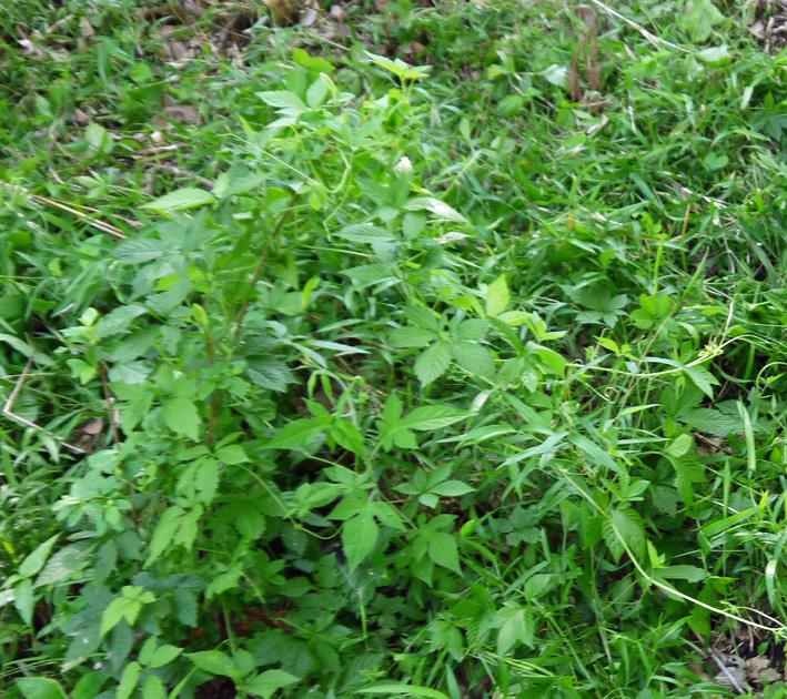 メーンの作業は苗木周辺の下草刈り5・20六国見山定例手入れ_c0014967_2223234.jpg