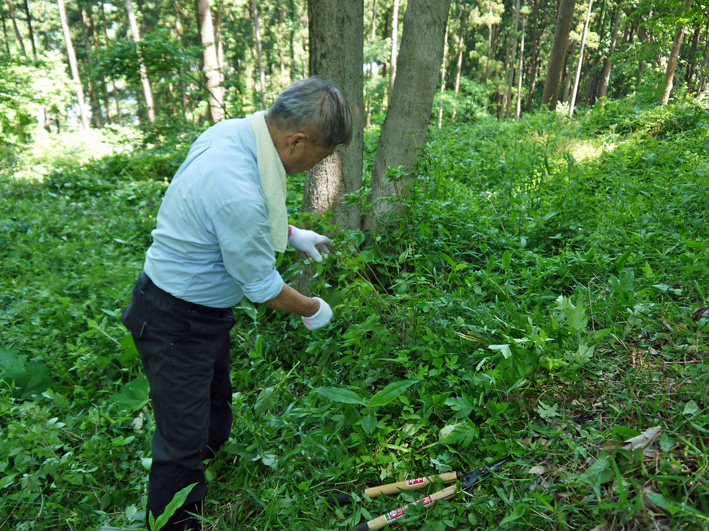 メーンの作業は苗木周辺の下草刈り5・20六国見山定例手入れ_c0014967_22233784.jpg
