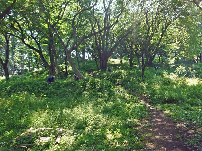 メーンの作業は苗木周辺の下草刈り5・20六国見山定例手入れ_c0014967_2224146.jpg