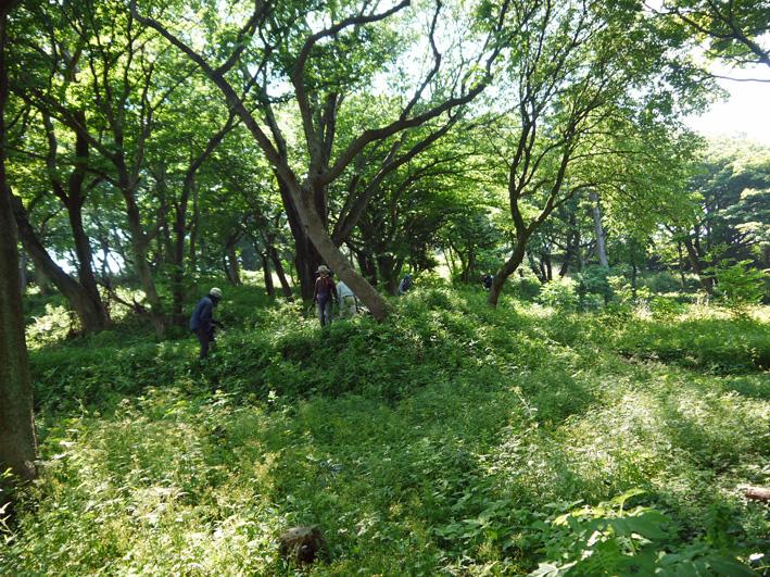 メーンの作業は苗木周辺の下草刈り5・20六国見山定例手入れ_c0014967_22242653.jpg