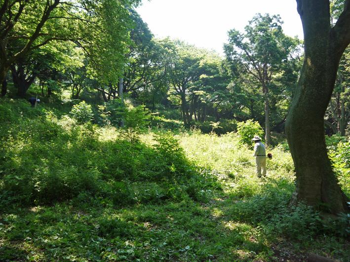 メーンの作業は苗木周辺の下草刈り5・20六国見山定例手入れ_c0014967_22243523.jpg
